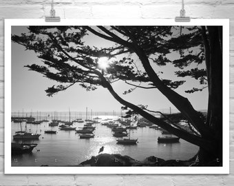 Sailboat Art, Monterey Bay California Art, Sailing Print, Monterey Gift, Monterey Cypress Tree Art, Black and White, Tree Silhouette Art