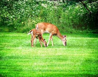 Deer Print, Animal Photography, Deer Picture, Nature Photography, Baby Animal Prints, Deer Photo, Nature Prints, Animal Print, Nature Print