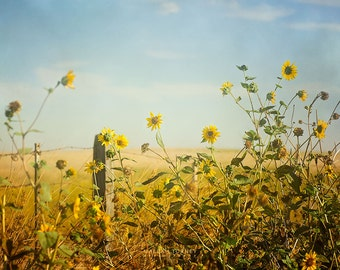 Country Decor, Sunflowers Landscape Photography, Large Wall Art, Yellow Flowers, Rustic Art, Sun Flowers Photo,
