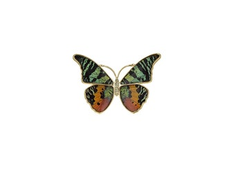 Real Butterfly Wing Pin. Magnetic Butterfly Pin. Madagascan Sunset Moth Magnet. Chrysiridia Ripheus Wing Pin.