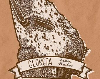 Georgia State Bird Print- Brown Thrasher, 8x10 inches.