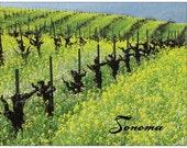 Sonoma Mustard Season Pos...