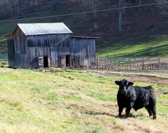 No Bull BARN T14 Photograph Tennessee - Barn Photography