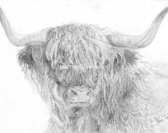 Art Print/Canvas - 14. Highland Coo