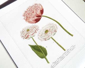 Botanical Tulip Study 1 in Pinks, Corals & Green Archival Quality Print