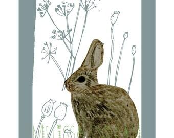 Naturama- Rabbit