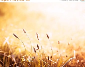 ON SALE nature photography grasses sunset photography 8x10 24x36 fine art photography golden summer grass rust orange autumn large art count