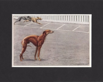 Whippet 1919  Vintage Dog Print by Louis Agassiz Fuertes Small Painting Mounted with Mat Whippet Print Whippet Picture
