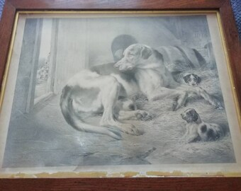 Hound and pups