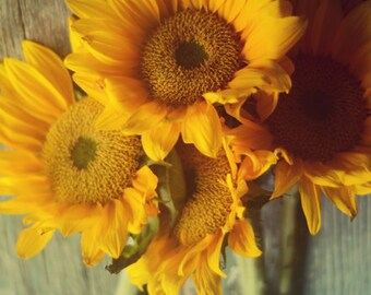 Sunflower photograph, yellow flower art, teal wall art, farmhouse decor, country decor, yellow and teal, shabby flower decor, girls decor