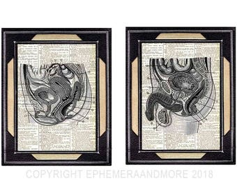 PELVIS Female and Male anatomy reproductive organs fertility vintage illustrations art prints upcycled dictionary book page wall decor 8x10