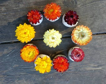 50 Seed Bomb Wild flower seed, orange mix dried flower on top. Save the bees, seed favour, strawflower, wedding favor baby shower, thank you