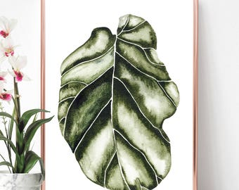 Fig, House plant print, Fiddle, House plant print, Fig tree, Botanical print, Tree, Fiddle leaf, Plant, Fiddle leaf fig, Illustration