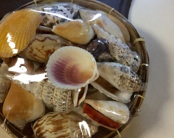 """Basket of Shells, 6"""" Round Basket, Assorted Shell, Beach, Arts & Crafts, Nautical Decor, Wedding Decorations, Beach Party, Bridesmaid Gifts"""