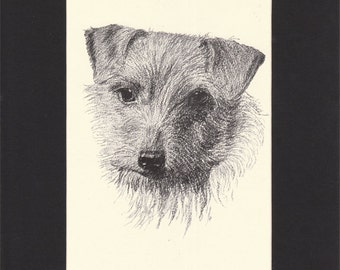 Norwich Terrier Vintage Dog Print by C.Francis Wardle - 1935 Print of Drawing, Mounted with Mat