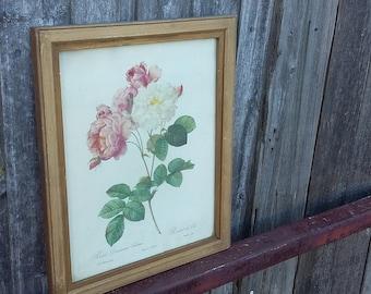 Vintage Rose Print in Large Gilt Frame Rosa Rosier