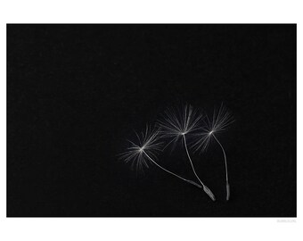 Nature Photography PRINT, Three Seeds, Wall Art