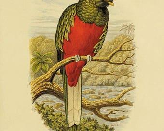 Parrot art print antique Bird Print Nature art print Vintage prints home decor wall art old prints Natural History Victorian art bird decor