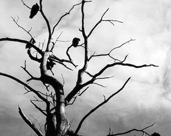 Birds of Prey - Bird Photography