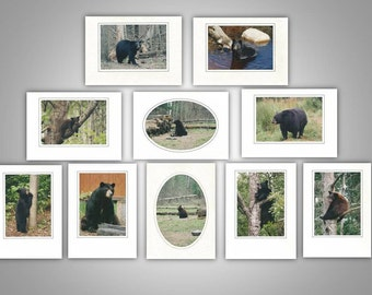 Bear Photo Note Cards (Pack of 10)