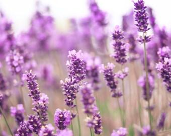 Lavender Aromatherapy Lip Balm