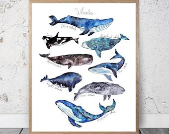 Aquarelle des baleines impression vente chambre Decor crèche garçons océan nautique baleine impression Illustration baleine affiche baleine Decor baleine Art mural