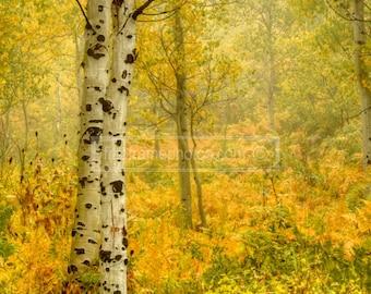 Fall in American Fork Canyon, Utah