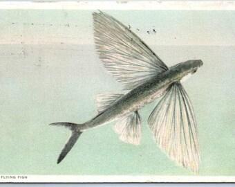 1915 Flying Fish Postcard