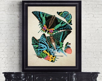Antique Botanical Print Wall Art Print Butterflies Insects Giclee Vintage Home Decor Natural History Print Art Decorative Reproduction BF007