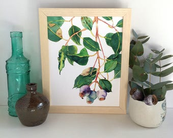 Gumnuts Botanical Print; Australian Native Plant Eucalyptus Wall Art; Gum  Tree Branch Watercolor Print