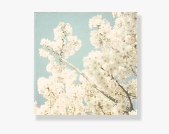 Flower canvas art, pale blue, white blossoms, flower photography, shabby chic decor, nature photography - It was a White Petal Monday