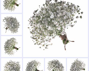 Fresh Baby's Breath Gypsophila Bunches   (Free Shipping)
