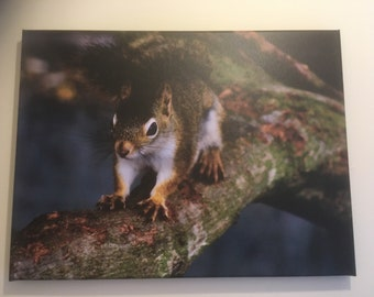 Red squirrel canvas