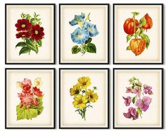 Set of 6 prints, Botanical print, Antique botanical print set, Flower print vintage, Dahlia, Morning glory, Helleborus, Flower printable set