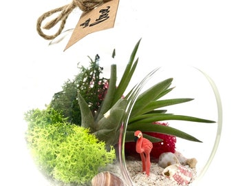 Flamingo Air Plant Terrarium Kit, Birthday, New Home, Best Friend, DIY Gift
