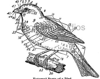 Thermofax Screen Bird Diagram