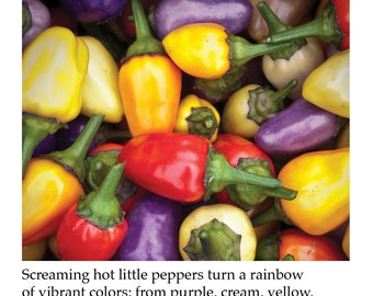Chinese Five Color Pepper Plant Tag Heirloom Hot Super Hot Sweet Hybrid Pepper Picture Garden Marker
