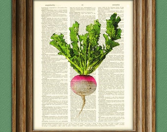 Turnip beautifully upcycled dictionary page book art print