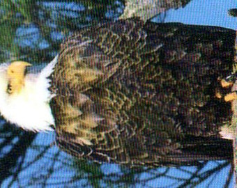 Bookmark - Eagle - Nature - Wildlife - America - For Him - Bald Eagle - River - Fish - Outdoors - Reading - North Woods - Christmas Present