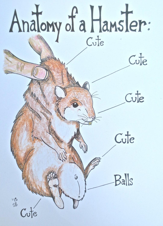 Hamster Art Print Anatomy Artwork Illustration Humor