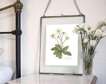 Wild Primrose, Botanical Wildflower Watercolour, Art Print