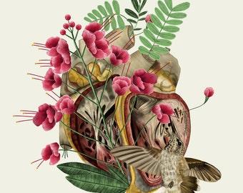 Anatomical Heart Print, Anatomical Art, Anatomical Drawing, Anatomy Illustration, Heart Illustration,Anatomical Collage Science Illustration