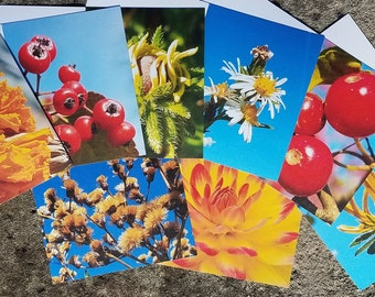 Flowers and Plants Note Cards, Set of 8 Assorted, Fine Art Photos