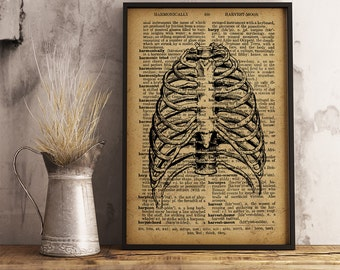 Anatomy, Anatomy Art Print, Human Sternum, Medical Illustration, Dictionary art print, Gift for a medical student or for Doctor's (HA01)