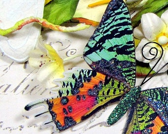 Butterfly Embellishments Madagascar Sunset