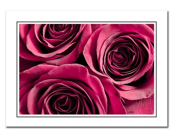 Flower Note card with Envelope, Rose Photo Card, Blank Photo Card, Thank You Card, Anniversary card