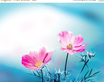 ON SALE botanical photography floral cosmos photography flowers 8x10 24x36 fine art photography nature spring wall decor nursery pink blue a