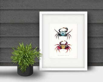 Coastal Decor - Two Mango Crabs Natural History Art Print 8x10