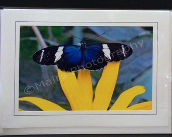 Indigo Butterfly Blue Black White Yellow Flower, All Occasion, Blank Greeting Card, Photo Card