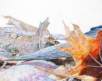 Hirundo Rustica / Barn Swallow